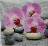 Salvete Orchids on stones 33x33cm 20/1
